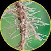 Análise de nematoides
